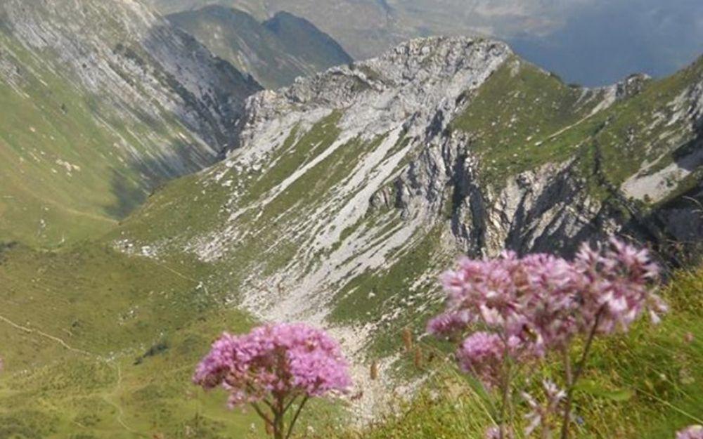 Sentiero dei fiori delle Orobie - BergamoXP