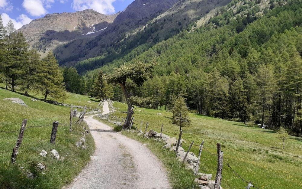 Il Bramito del Cervo in Val Grande - BergamoXP